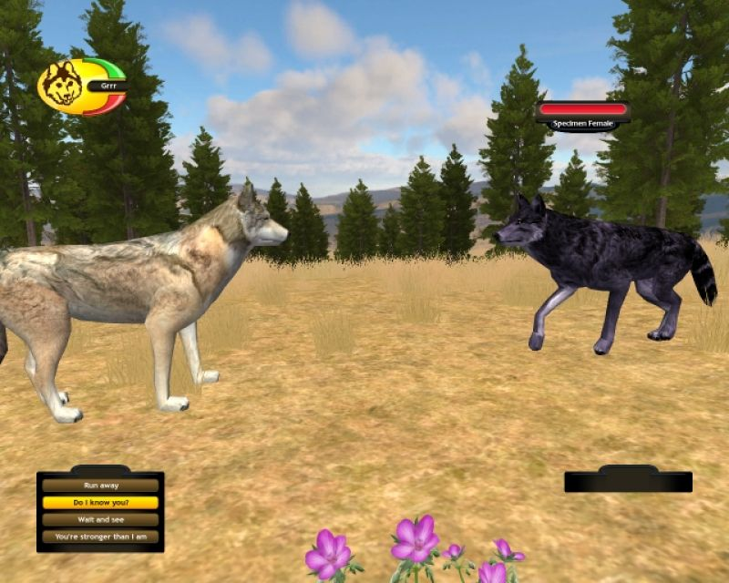 wolf quest play online